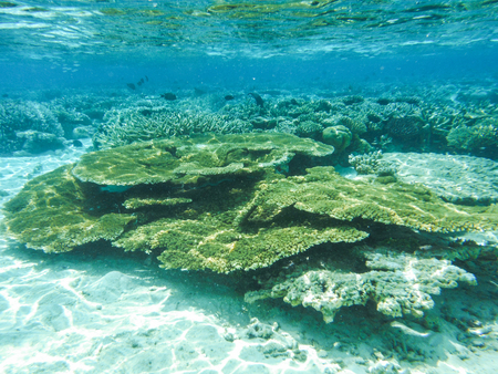Underwater view with wonderful and beautiful corals and tropical fish at Maldives 스톡 콘텐츠