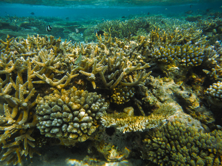 Underwater view with wonderful and beautiful corals and tropical fish at Maldives 版權商用圖片