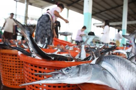commercial fisheries: Fishery  Needlefish