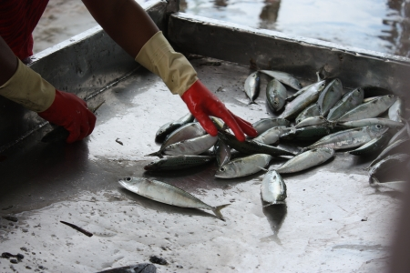 commercial fisheries: Fishery Stock Photo