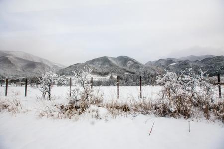 scenary: Mountain scenary to Takayama in winter season