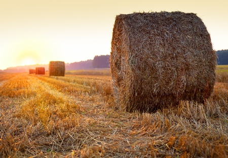 Sunrise over harvested field with hay bales Stock Photo