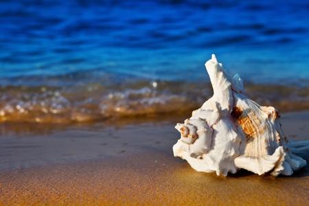 Seashell auf der Sommer-Strand direkt am Meer Standard-Bild