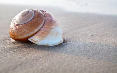 fibonacci: Seashell on the summer beach next to the sea