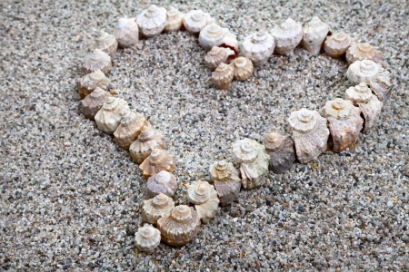 Love heart made of sea shells. Summer composition photo