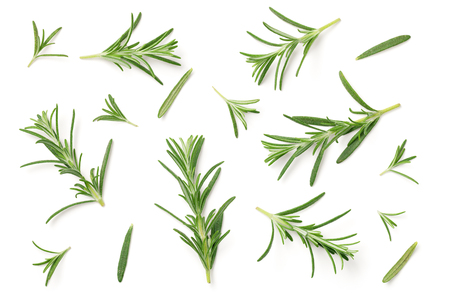 Rosemary isolated on white background. Flat lay. Top view Imagens