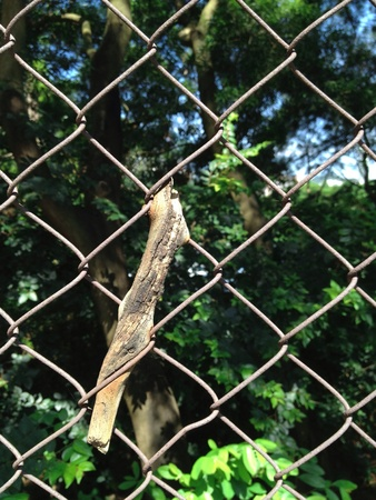 blighted: Green trees behind the barbed wire with blighted leaf in contrast.