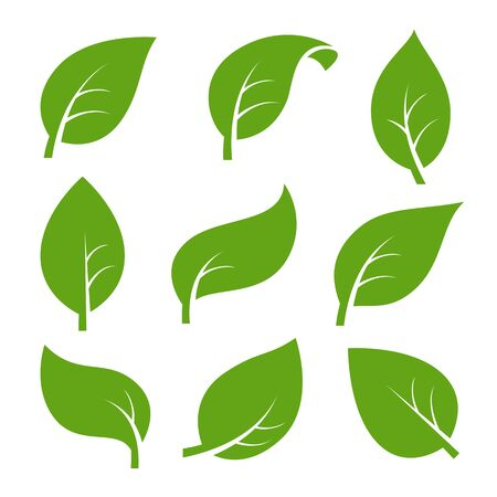 Eco green color leaf vector logo flat icon set. Isolated leaves shapes on white background. Bio plant and tree floral forest concept design. 向量圖像