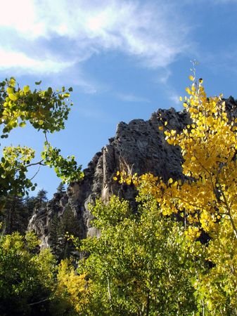 Aspen trees on the slope of Mt. Charleston in Nevada. Stok Fotoğraf