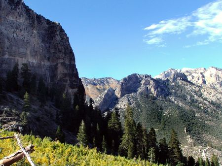 The slope of Mt. Charleston in Nevada.