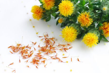 Dried and fresh flowers safflower photo