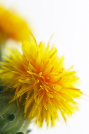 Close-up of safflower Kho ảnh