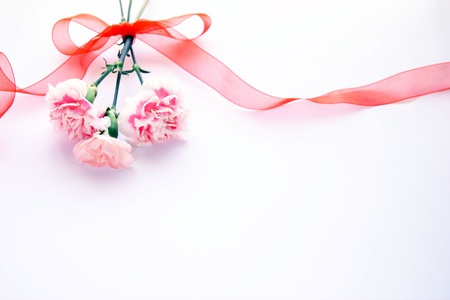 carnations: carnation