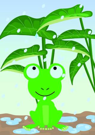 dodge: Frog dodge the rain under the leaves