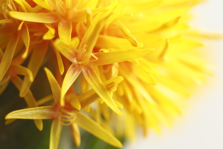 Details of safflower