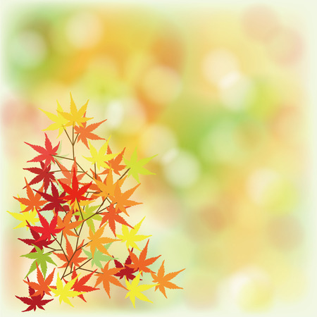 was: Background was blurred with maple colorful