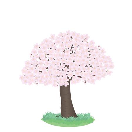 cherry trees: cherry trees Illustration