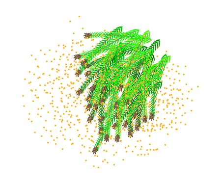 Oorzaak van pollenallergie, cederpollen. Stock Illustratie