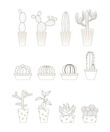Various forms of cactus.