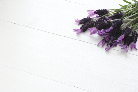 Freshly picked lavender flowers on white board.