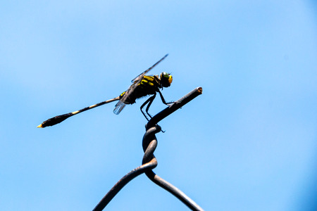 odonata: Dragonfly is on top of net wire fence.