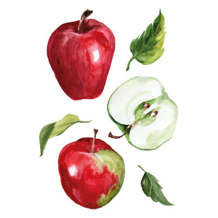 Watercolor drawing of apples with leaves on a white background