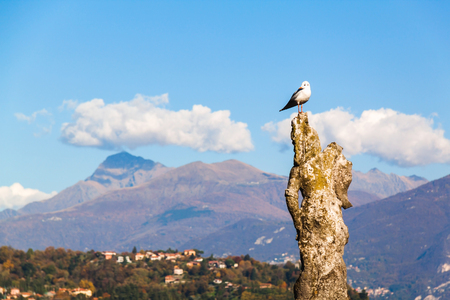 Seagull sitting on an old decayed statue. Como lake in Lenno town, Italy. Stock Photo