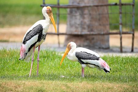 Bird with long beak photo