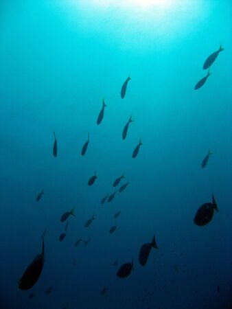 school of fishes in the open water Stock Photo - 4180630
