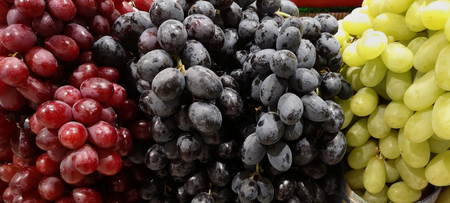 red seedless fresh grape,green seedless fresh grapes are placed together to see colorful Imagens