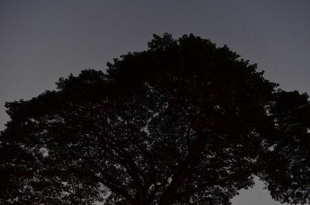 dark: Dark tree
