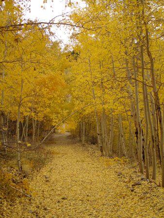aspen leaf: Colorado Aspen Leaf Tunnel
