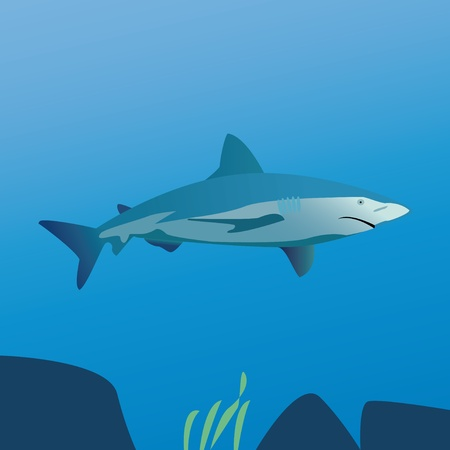 big blue shark in the sea Illustration