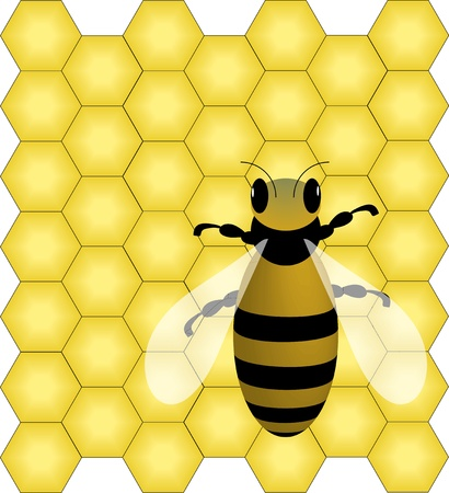 bee and honeycombs Stock Photo