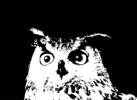 орнитология: Векторные иллюстрации черный силуэт совы мультфильма. Иллюстрация