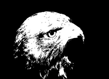 Vector illustration of a black cartoon hawk silhouette. Stock Vector - 12156616