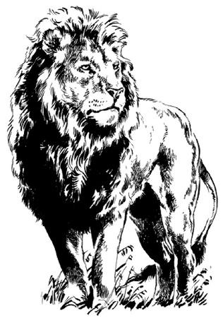 lion drawing: 124 (9). Jpg