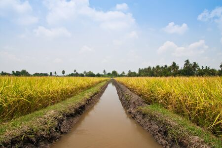 canal in rice field photo