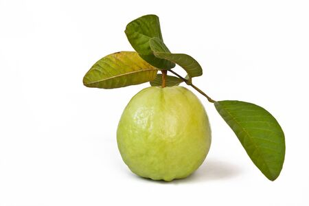 Guava with leaves Stock Photo - 9881857