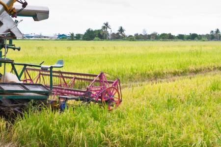 combine harvester on a rice field  photo