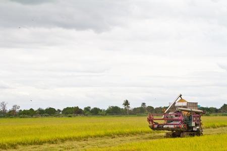 Combine harvesting rice Stock Photo - 14853237