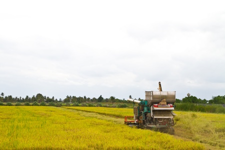 Combine harvesting rice photo