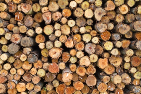 Cross section of pine logs Stock Photo - 14956105