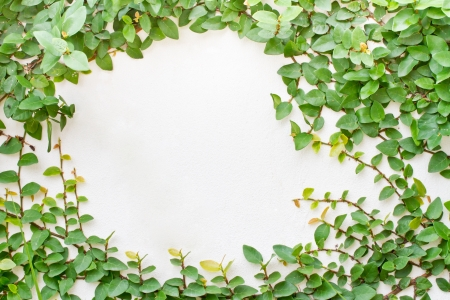 Green creeper plant on white background Stock Photo - 15067862