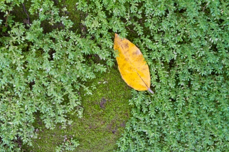 spore: Yellow leaf on green moss