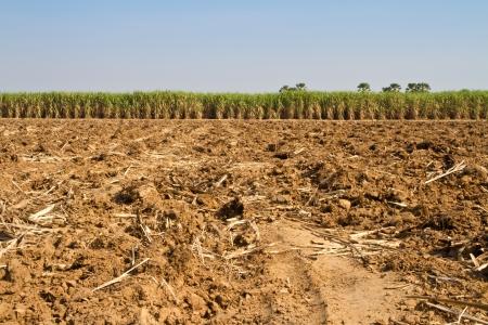 Sugarcane Stock Photo - 17125588