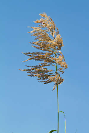 Grass flower against blue sky photo