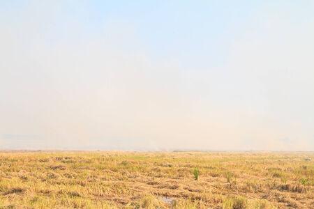 Rice straw burning photo