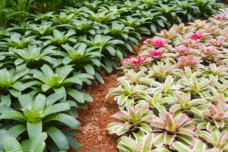 Bromeliad garden in green house  photo