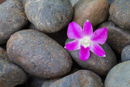 Purple or chid on pebble stone photo